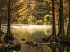 Soft Dawn (keith_shuley) Tags: dawn gold golden cypress cypresscreek austin texas redbudisle creek stream texashillcountry