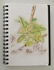 04_plantas ([silvicius]) Tags: taller soniaesplugas illustration ilustración boceto sketch colores colors silvicius silviaparravicini silvis