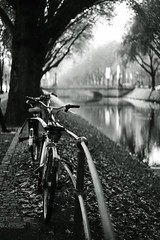 bike@Kö, Düsseldorf 11 (Amselchen) Tags: bicycle trees kö düsseldorf germany mono monochrome blackandwhite bnw bokeh blur dof depthoffield sony a7 alpha7 sonyilce7 fe55mmf18za sonnart1855 sonnar5518za