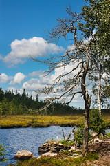 IMG_4106-1 (Andre56154) Tags: schweden sweden sverige natur tree sky landscape wasser water ufer wolke cloud