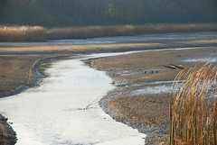 DSC_1912 (FMAG) Tags: 2017 żabieniec zalesie jesien