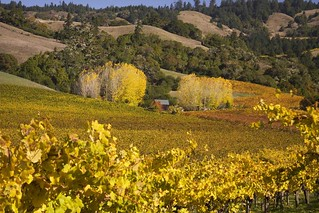 Rita Crane Photography: After the Harvest, Mendocino County