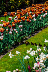 New Journey (BeNowMeHere) Tags: ifttt 500px field spring travel colors agriculture trip farm colorful tulips journey meadow rural scene colourful plantation cultivated land vegetable garden path nature flowers colours amsterdam keukenhof netherlands duckling benowmehere lissed newjourney
