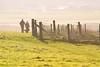 (Shane Jones) Tags: light fence field sunlight grass nikon d500 200400vr