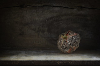 Physalis in a box