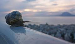 Orient Express (KOSTAS PILOT) Tags: snail greece peloponese achaia patras sunset horizon sky colors kostaspilot sony xperia walking balcony dasillio urban ionion mediterranean paliovouna patraikos clouds goldenlight goldenhour ελλάδα πελοπόννησοσ αχαιασ πάτρα ηλιοβασίλεμα ηλιοβασίλεμαπατρασ πατρινοηλιοβασίλεμα ιονιον μεσόγειοσ θάλασσα παλιοβουνα δασυλλιοπατρασ μπαλκόνι οριζοντασ συννεφα σαλιγκάρι focus orientexpress bokeh