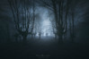 The Ghosts of the forest (Mimadeo) Tags: scary dark fog night forest nightmare horror lost fear mood moody atmosphere atmospheric monochrome blue landscape magic tree shadow light evening nature mystery mist spooky foggy darkness misty halloween woods evil creepy fantasy gothic mysterious surreal silhouette enchanted ghost moonlight bare haunted eerie