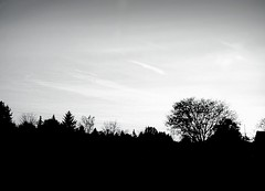 Silent Silhouette~ (K.Chris ~AlwaYs LeaRning~) Tags: bw blackandwhite bnw noir monochrome monochromatic forest sky nature clouds landscape contrast light shadow silhouette trees field woods