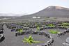 Lanzarote (Vides) (Jose Andres B) Tags: jabrbio lanzarote vides grapevine isla canarias