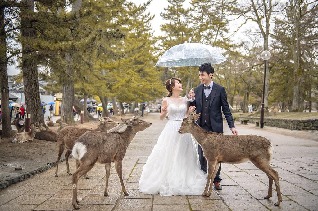 京都婚紗 奈良公園婚紗拍攝