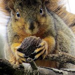 Capturing a Thanksgiving moment in a squirrely way. thumbnail
