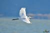 A-LUR_2073 (OrNeSsInA) Tags: trasimeno uccelli bird natura italia umbria castiglionedellago ornessina lucarosi nikon tamron byrd lago chiusi siena perugia aironi cormorani