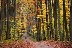 colours of autumn (JoannaRB2009) Tags: colours autumn fall nature las forest woods path road alley avenue tree trees man dog leaves yellow red afternoon lasłagiewnicki łódzkie lodzkie łódź lodz polska poland
