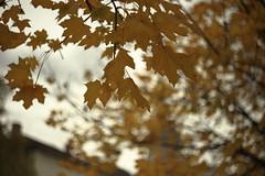 Helios-44M-4 (bencze82) Tags: budapest city autumn fall ősz cityscape travel park levelek leaves fák tree canon eos 6d helios44m4 58mm f2 m42 jános pál pápa tér ii