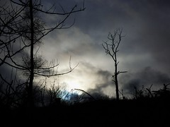 Winter Sky (Tobymeg) Tags: grey blue tree sky cloud dark light panasonic dmcfz72