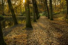 Autumn (♥siebe ©) Tags: 2017 groenendaal heemstede holland nederland netherlands siebebaardafotografie thenetherlands autumn dutch fotografie herfst