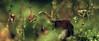 the garden of sporo delights (pete ware) Tags: sporophytes wet droplets 3imageblend peteware nik photoshopcs5 afnikkor50mmf18d extensiontubes macro topazdenoise viveza nikond7000