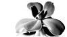 Crassula ovata (CWhatPhotos) Tags: cwhatphotos green leaf mono black white monochrome wallpaper olympus omd em5 mk ii digital camera photographs photograph pics pictures pic picture image images foto fotos photography artistic that have which with contain art stubby leafed plant jade money crassula ovata pot lucky nature