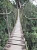Canopy Bridge #canopy #bridge #eastkalimantan #borneo #forest #balikpapan (suryanti.bza2425) Tags: canopy bridge eastkalimantan borneo forest balikpapan