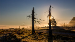 Misty morning (lensflare82) Tags: mist nebel fog morning outdoor sunrise sonnenaufgang tree baum silhouette grass sun sonne licht light autumn fall herbst atmosphere atmosphäre 700d eos canon shutterbug natur nature landschaft landscape