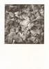 Ginkgo Abstract (Stephen A. Wolfe) Tags: swolfe2000 adobelightroomcc canoscanfs2710 gingko hahnemuhleplatinumragpaper iso1600 ilforddeltap3200 kodakhc110 nikonfm3a ohio platinumpalladiumtoned platinumpallidiumprint upperarlington abstract alternativeprocesses httpstephenwolfephotography ilford kallitype palladium platinum