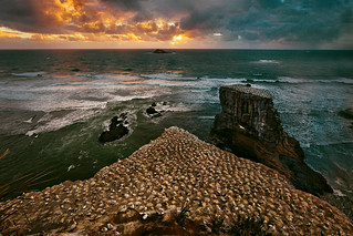 Sunset at Clifftop Gannet Colony