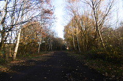 Railway trackbed, Dodworth  Silkstone - Wath old railway    November 2017 (dave_attrill) Tags: dodworth great central railway electrified woodhead sheffield victoria manchester picadilly closed 1970 1955 stocksbridge engine transpennine upper don trail penistone wortley wadsley neepsend dunford thurgoland tunnel oxspring barnsley junction huddersfield allweather cycleway bridleway footpath remains silkstone 2016 1981 dove valley november 2017 dovevalleytrail worsbrough worsbroughbranch