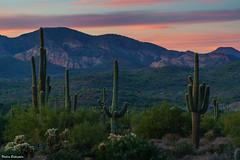 20171124-DSC00928.jpg (Puckman2012) Tags: cactus arizona saguaro lostdutchmanstatepark phoenix sunset