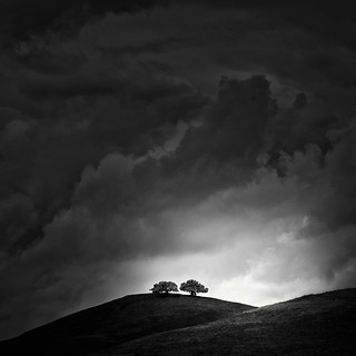 Two Trees on a Hill