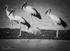 DSC_9441 (@sumitdhuper) Tags: beauty wallshare animal birds