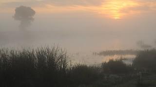 An der Treene am Morgen; Norderstapel, Stapelholm (24)