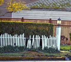 Disrepair (creepingvinesimages) Tags: hff fence picket white lafayette oregon lamppost nikon d7000 pse14 topaz