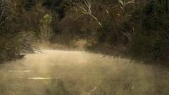 Vaporous Pall (keith_shuley) Tags: misty mist fog foggy creek stream winter texas austin texashillcountry