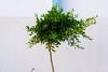 Life itself, second part (Saâd Jebbour) Tags: 2017 tree summer bush nikon 50mm one vertical morocco rabat temara harhoura sidelabed saadjebbour vsco nature