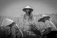Sapa Vietnam (Debbie at Travel with Intent) Tags: northvietnam riceterraces