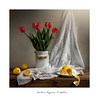 🍋......🌷🌷🌷🌷........🍋 (.... belargcastel ....) Tags: bodegón still flores tulipanes tulipán tulip mantel limón textile stilllife lemon light luz belargcastel belénargüesocastelos españa spain galicia flowers home lechera texturasmp
