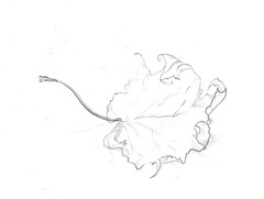 002b (felicity-art) Tags: sketch pencil