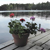 Lac du Flambeau, WI, North Woods, Visiting Greg and Ginny Stiles, Potted Geraniums (Mary Warren 9.6+ Million Views) Tags: lacduflambeauwi northwoods nature lake water shoreline pier pottedplant blooms blossoms flowers geraniums