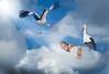 bébé et les cigognes (cristgal56) Tags: bébé cigognes naissances montage nuages enfant nouveauné