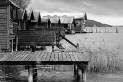 Winter's coming (macrobernd) Tags: starnbergersee see lake winter stormy windig hütte hütten bootshaus bootshäuser alpen grau bedeckt cloudy alps grey monochrome monochrom sw bw landscape landschaft