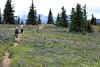 Hiking Heather Trail (gerry.bates) Tags: ecmanningprovincialpark nature landscape mountains cascademountainrange meadow wildflowers flowers britishcolumbia canada canon summer hiking trails flora trees slopes alpine
