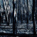 Blue Forest thumbnail