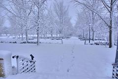 020313-933 (kzzzkc) Tags: nikon d7000 usa missouri kansascity snow tree nelsonatkins museumofart walkway stairs handrails