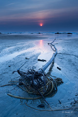 At The End Of The Day (Masako Metz) Tags: beach sunset cold winter cool driftwood seaweed reflection ocean sea water nature landscape seascape soft light oregon coast pacific northwest usa america end day