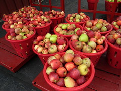 Lots Of Apples. (dccradio) Tags: cavetown smithsburg md maryland produce producestand ag agricultural farm farming agriculture fall autumn harvest orchard mountainvalleyorchard canon powershot a3400is apple apples fruit