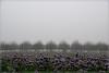 Der Herbst bringt den Nebel II (_Asphaltmann_) Tags: pentax pentaxlife pentaxians photosunlimted pentaxart photos pentaxk3 pentaxda k3 18135mm smcpda18135mmf3556edalifdcwr nebel fog natur nature