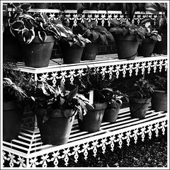 STREET - Lines (Ageeth van Geest) Tags: flora 7dwf vintage retro organic monochrome blackandwhite bw street plant lines