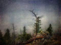 The Nurturing Silence of Fog (katezariroberts) Tags: landscape stackables ngc