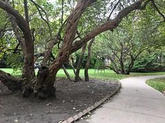 Gnarly bush (Quistian) Tags: knox uoft toronto nature