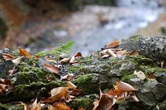 Views of Yoro Park (rumpleteaser) Tags: fall autumn japan macro mountain peaceful relaxing nature